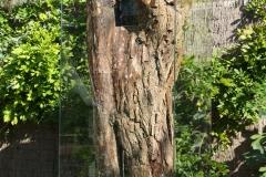 bomen over bomen